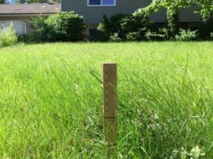 Grass Not Allowed 1