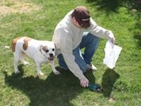 Pet Cleanup